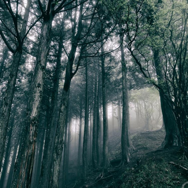 AKIRA KOSEMURA - In The Dark Woods - 800x800